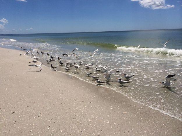 donpedrobirds