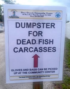 deadfishcarcasses