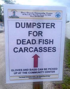deadfishcarcasses