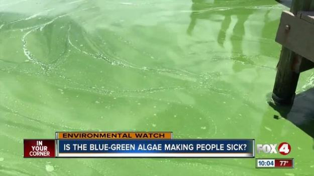 greenalgae